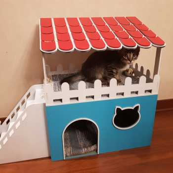 A house for our kitten